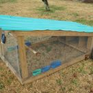 Chicken Tractors Help You to Feed and Raise Chickens with Less Work