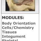 An Online Examination of Human Anatomy and Physiology • GetBodySmart