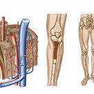 1000 Piece Puzzle. Anatomy of human bone marrow