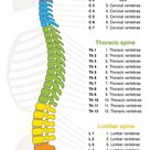 Spinal Cord Anatomy - What You Need to Know   Geoffrey Cronen, MD
