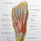 Notes on Anatomy and Physiology: Using Imagery to Relax the Weight