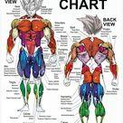 Pegatina ''Saiyan Anatomy Chart - Muscle Diagram - Anime Workout' de veggieflex