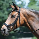Busse Feeling Anatomical Bridle - Full / Black and White