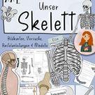 Skelett - XXL Materialpaket - Knochen, Gelenke, Wirbelsäule
