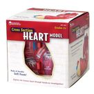 Learning Resources Cross-Section Human Heart Model