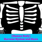 Human Body Nervous System & Brain   This Sweet Life
