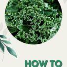 How to Grow Kale ANYWHERE
