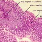 anatomyforme
