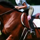 English Horseback Riding