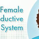Female Reproductive System (for Teens)