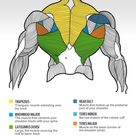 The Big Reasons Your Back Isn't Growing