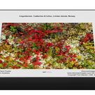 1000 Piece Puzzle. Lingonberries, Cowberries & Lichen, Lofoten