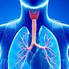 Hey, Biology Buffs, Here's Exactly How Asthma Works in the Human Body
