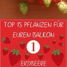 Pflanzen für den Balkon: Unsere Top 15 - Plantura