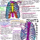 hanson's anatomy