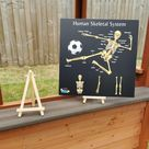 Teddo Play Human Anatomy & Skeletal System Portable Poster Boards (Large: 30x30cm)