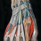 Hand Muscles Origin, Insertion, Action & Nerve Supply