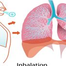 Tips To Prevent Lung Cancer, Functions of Lungs, Tips For Healthy Lungs, Lung Cancer Prevention Tips