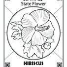 Hawaii State Flower | Worksheet | Education.com