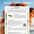 Hunde Leseverstehen Arbeitsblätter
