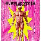 MUSCULAR SYSTEM, An Interactive Notebook