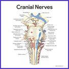 Nervous System Anatomy and Physiology - Nurseslabs