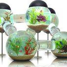 Awesome Aquariums: 4 Cool Modern Fish Tank Designs