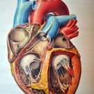 Pre-clinic Requirements: Physiology of the Heart
