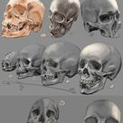 Drawing practise: The human skull by IgnazioDelMar on DeviantArt