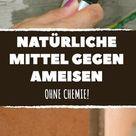 Ohne Chemie: 10 natürliche Mittel gegen Ameisen in der Wohnung.