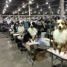 Dog Competitions