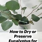 How to Dry or Preserve Eucalyptus for Decor
