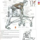 One armed dumbell row is one of my favorite back exercises.