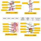 Parts of the body systems worksheet
