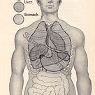 Human Anatomy Chart Heart Lungs Digestive System 1920 Vintage Anterior Position Medical Chart Black & White