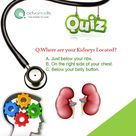 QUIZ. Q. Where are your Kidneys Located? A.Just Below Your Ribs. B.On The Right Side Of Your Chest. C.Below Your Belly Button.