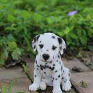 78 Best Meine tierischen Freunde images in 2020   Cute animals, Baby animals, Cute baby animals