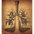 A1 Poster. Human Lungs anatomy