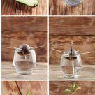 Cómo plantar un aguacate paso a paso
