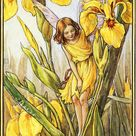 Flower Fairies Illustration von Cicely Mary Barker - die Iris-Fee, 1934 Stockfotografie - Alamy