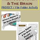 Nervous System Project   The Brain   File Folder Type Activity   Body System Parts and Functions