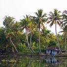 HD wallpaper: india, kerala, backwaters, coconut trees, reflection, nature
