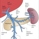 9 The Hepatic Artery, Portal Venous System and Portal Hypertension: the Hepatic Veins and Liver in Circulatory Failure