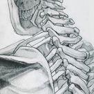Skeleton Study 3 by jamesjulier on DeviantArt
