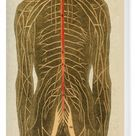 Box Canvas Print. Human nervous system