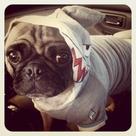 Shark Week Costume