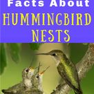 7 Riveting Facts About Hummingbird Nests