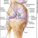 Acute Knee Effusions: A Systematic Approach to Diagnosis