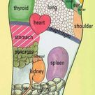Reflexology of the Foot and the Organs – Waking Times