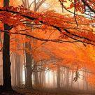 Fall Or Autumn